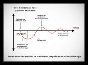 Hipertrofia volumen optimo masa muscular - ISAF