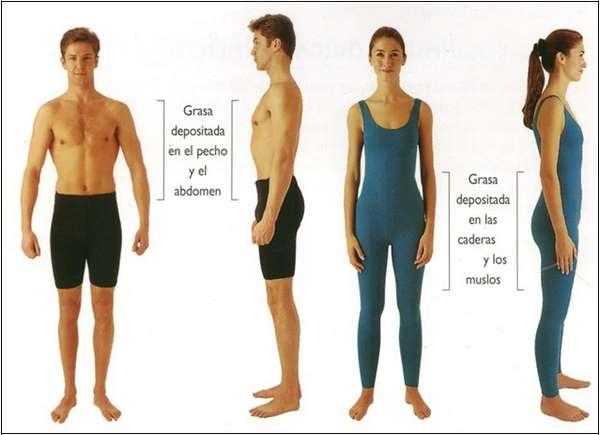 grasa corporal hombre y mujer